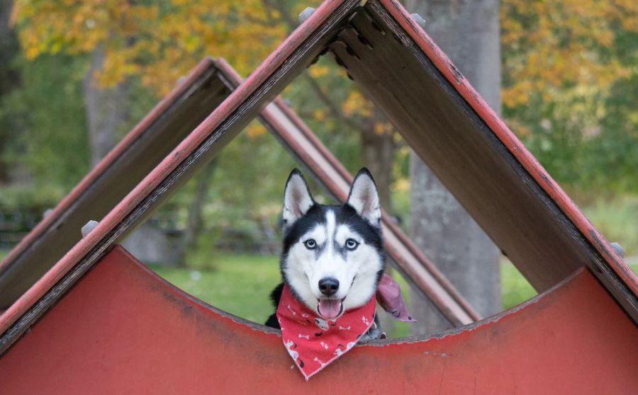 Idées de niche d'extérieur que votre chien va adorer