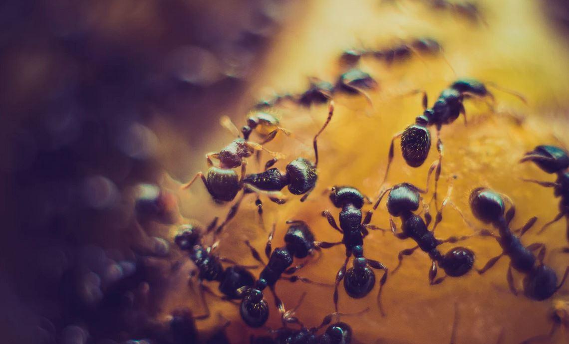 Produit anti fourmis pour lutter contre elles