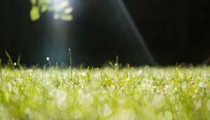 planter de l'herbe dans son jardin