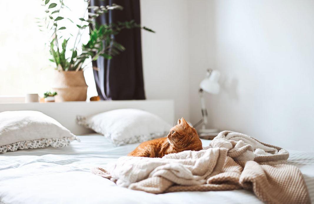 Relier deux lits : découvrez la démarche à suivre !
